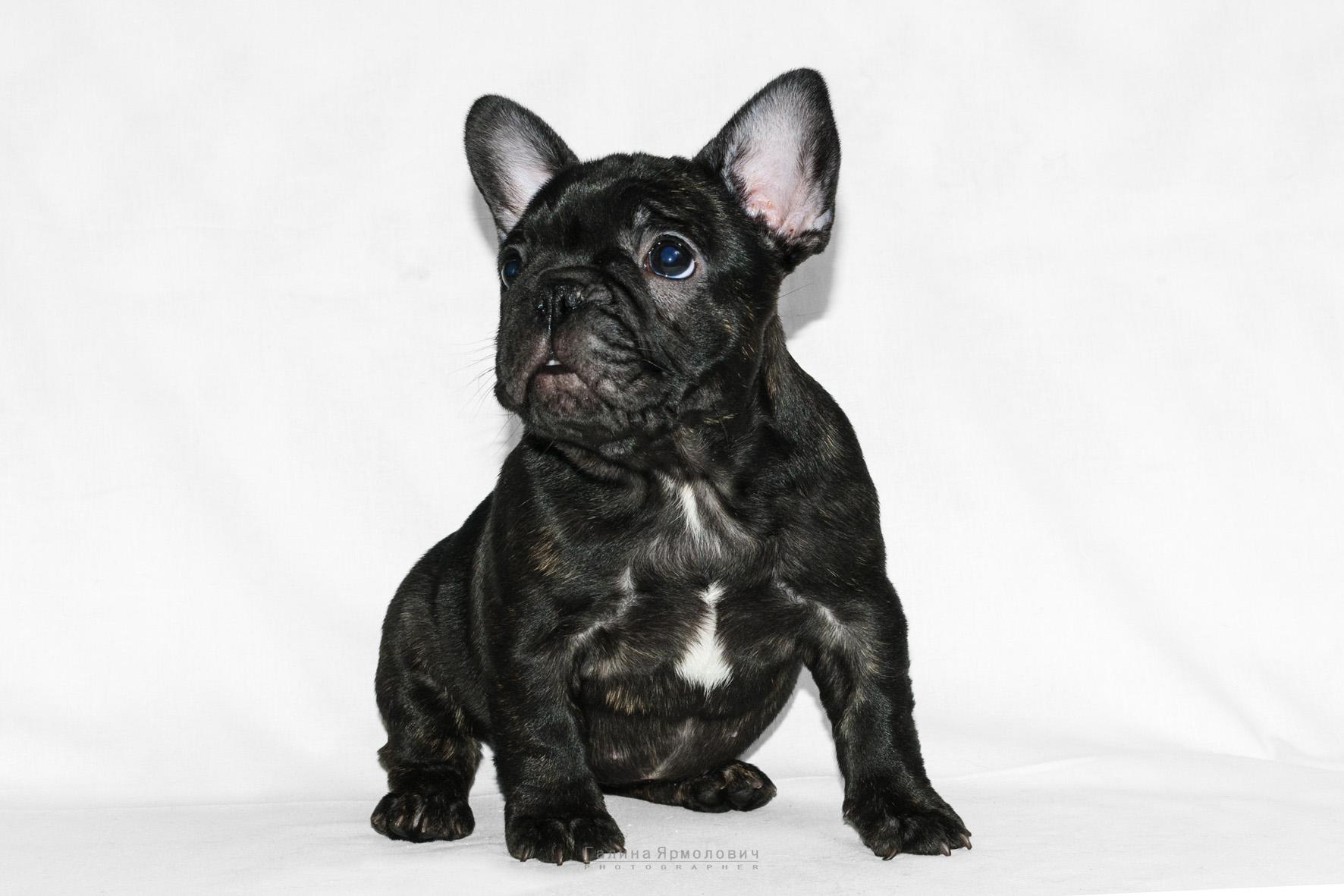 бланк договор купли-продажи щенка собаки